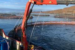 aquaculture (8)